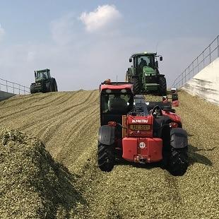 Kukuřice na siláž