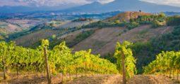 2018 vinice France ořez
